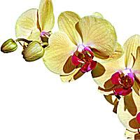 Qigong exercises, Qigong meditation, shiatsu acupressure, acupressure therapy